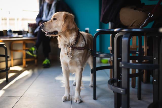 UK Dog Friendly Pubs