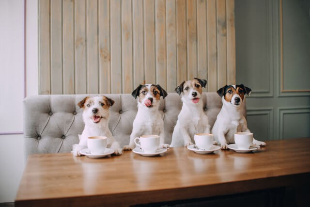 Best Pet Friendly UK Pubs - Lola Jeans
