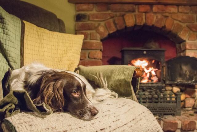 Pet Friendly UK Pubs - The Greys Inn