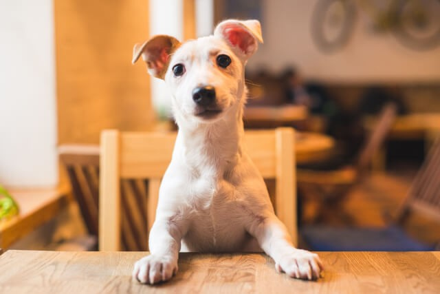 Best Pet Friendly UK Pubs - The Priory Pub in Tynemouth