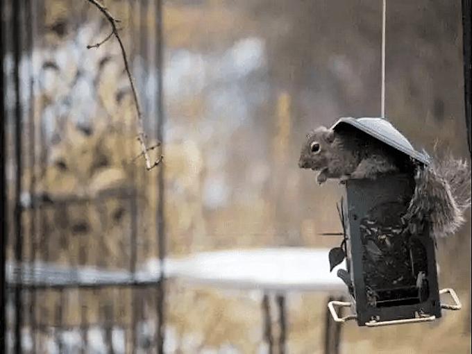 WD40 HACKS - Bird Feeder Protection